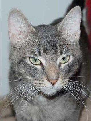 Pets - Priscilla 03-06-15 Web