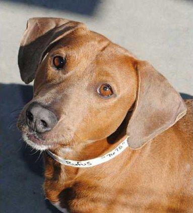 Pets - Rufus WEB