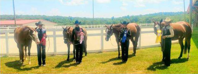 4-H Horse Club Web
