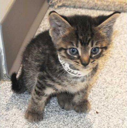 Cat - 4-22-16 Web