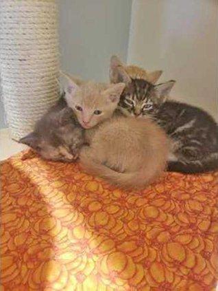 kittens Web