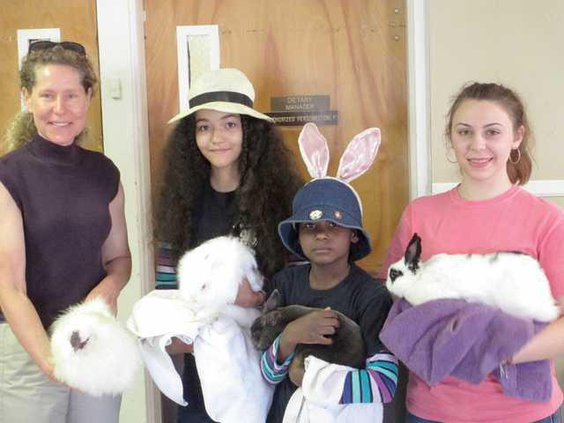 4H Rabbit Club WEB
