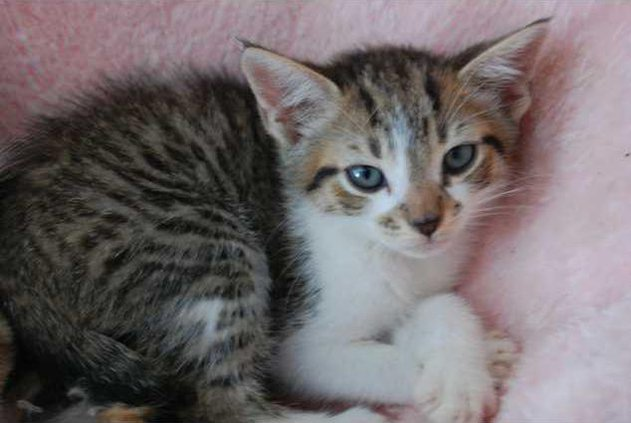 Kitten WEB