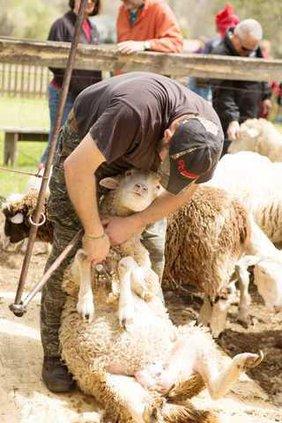 McCaskills Farm Web