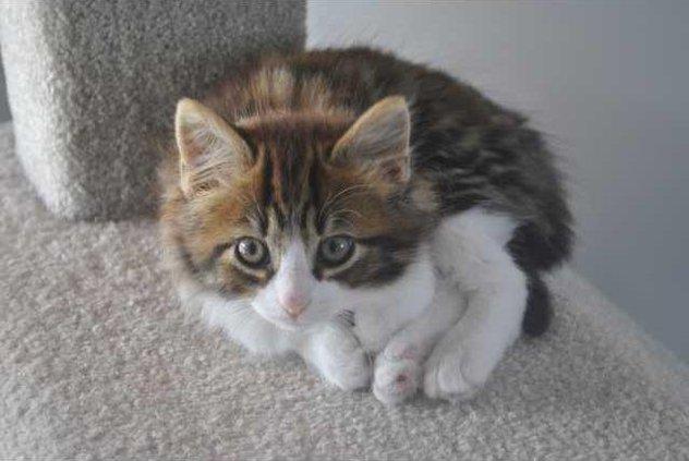 Pet of week - cat.JPG