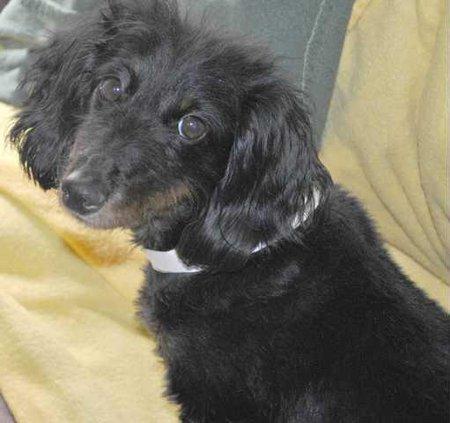 Pet of week - dog.JPG