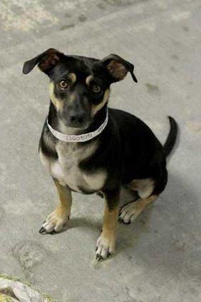 Pets - 07-20-12 - Dog - Charlie