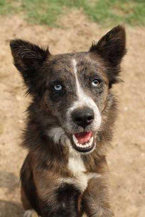 Pets - Dog - Sullivan - 07-27-12