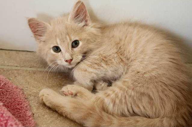 Pets cat2 09-07-12Web