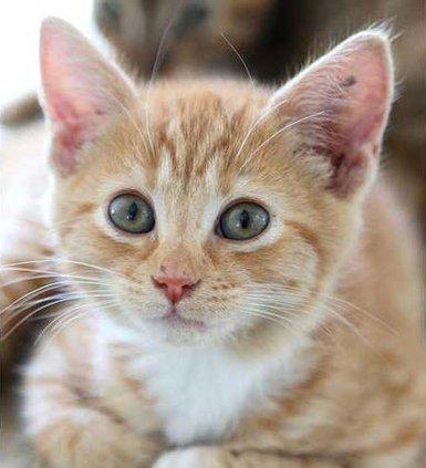cat3 web