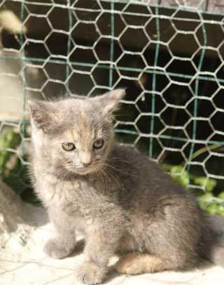 kitten2web