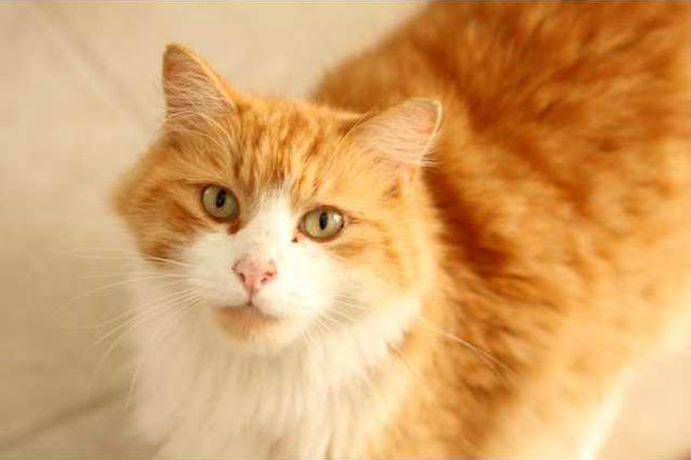 Pet of week - cat