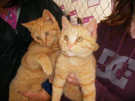 Pets - Two male kittens - WEB