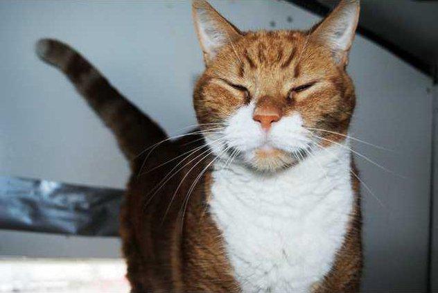 Pets Garfield 02-14-14 WEB