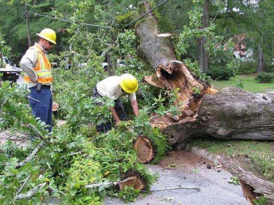 Post oak 4