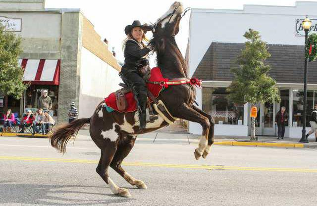 Kershaw County Christmas Parade - Horse