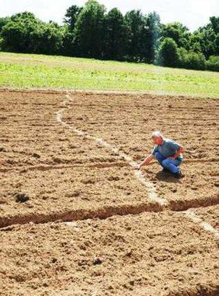 snake in dove field