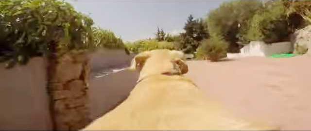 Dog Race - 09-05-12