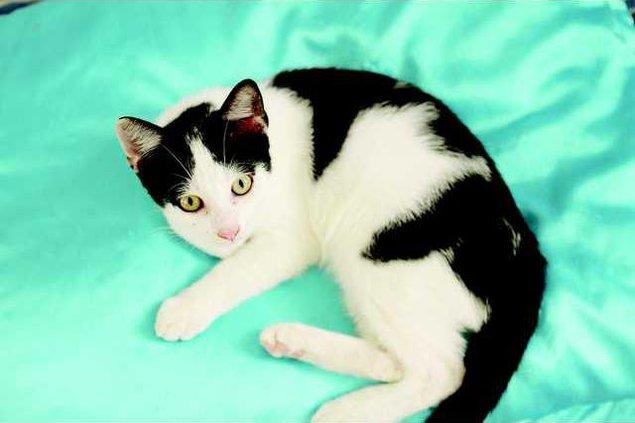 Pets - cat4 - 08-31-12 T