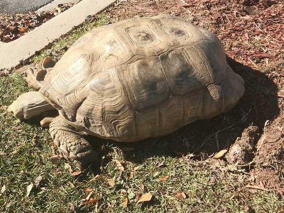 Turtle 2 Web
