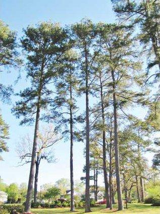 Trees for Gilland Column