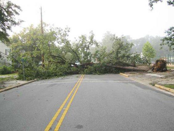Tree Down on Fair Street