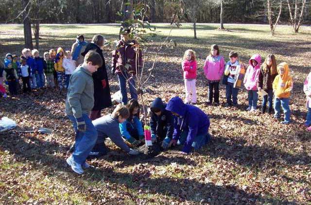Montessori Arbor Day 3