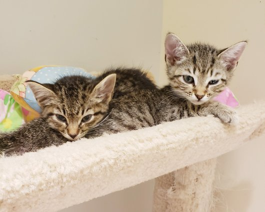 Kittens (W).jpg