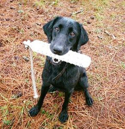 Retriever Club - Dog (W).jpg