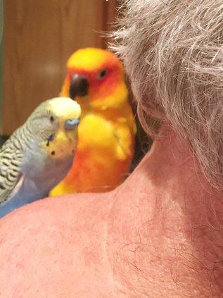Birds on a Shoulder