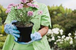 Plant Sale art